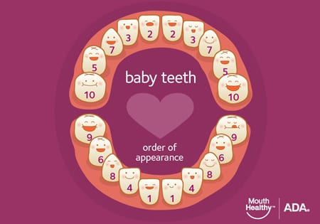 ada chart for when baby teeth erupt